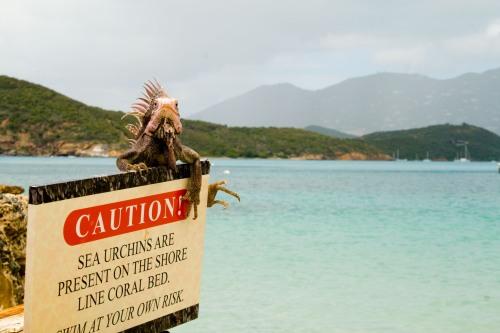 Iguana on Sign