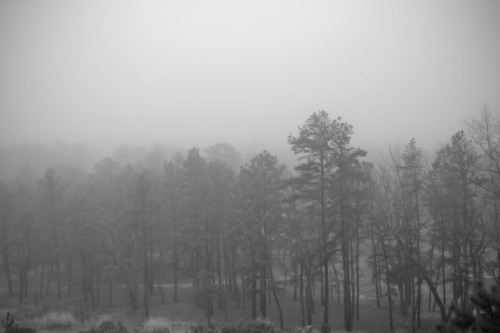 Fog ettling over Push Pines