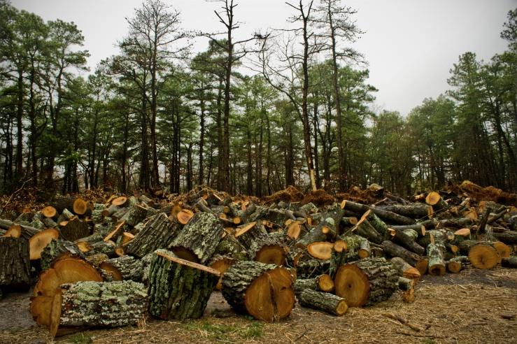 Log Field