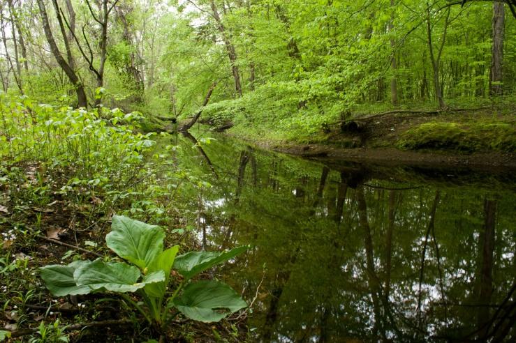 Greenery Along a Stream