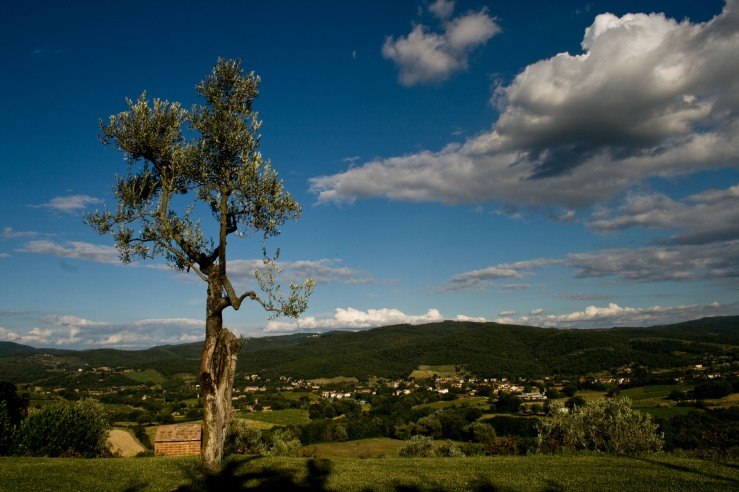 Tree Over Tuscany Valley