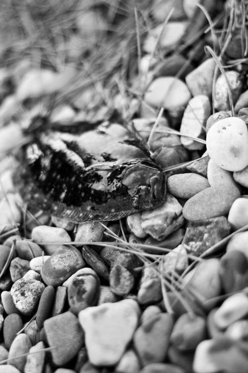 Flounder on the Rocks II