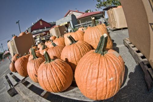 First Pumpkins of Fall