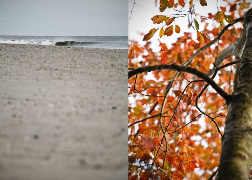 October Surf & Foliage
