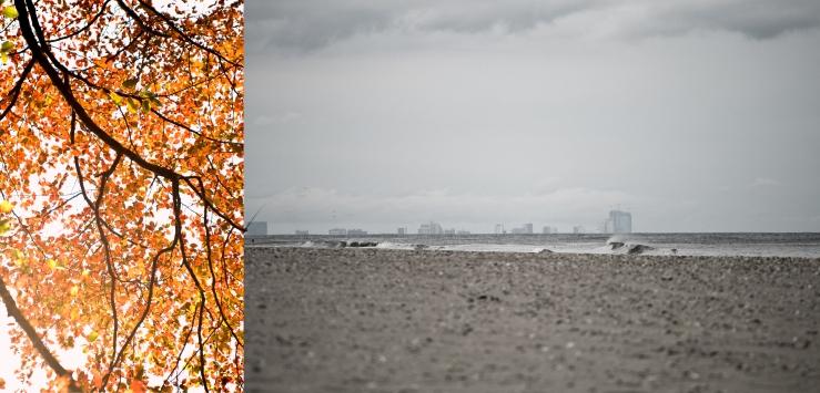 October Surf & Foliage II