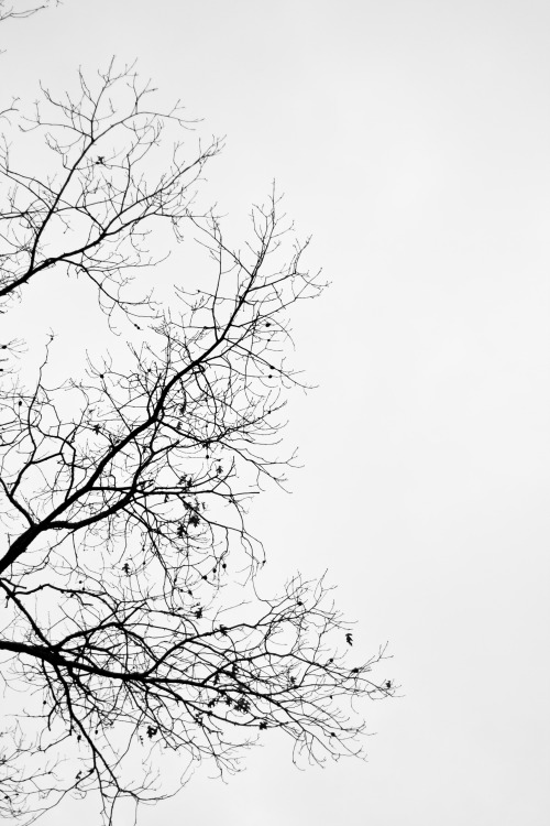 Empty Tree Branches