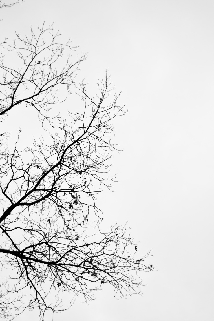 Empty Tree Branches